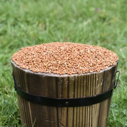 Red Millet Seed for Birds