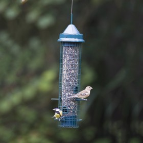 Squirrel Buster® Classic 1.4Litre Bird Feeder