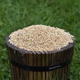 White Millet Seed