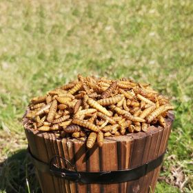Dried Calci Worms