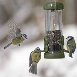 Ring-Pull Click™ Seed Feeder - Green
