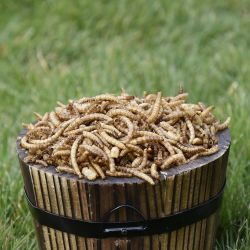 Dried Mealworms Lifestyle