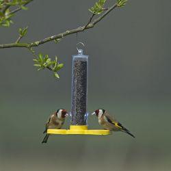 Goldfinch Finder