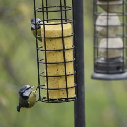 Suet Rolls for Wild Birds