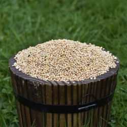 White Millet Seed for Birds