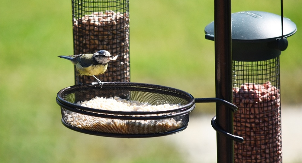 states north bird amazon feeders feeder outdoor wild food garden tube com dp